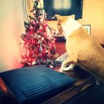HOW TO PROTECT THE CHRISTMAS TREE FROM YOUR PET