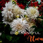 BE THANKFUL ALWAYS…