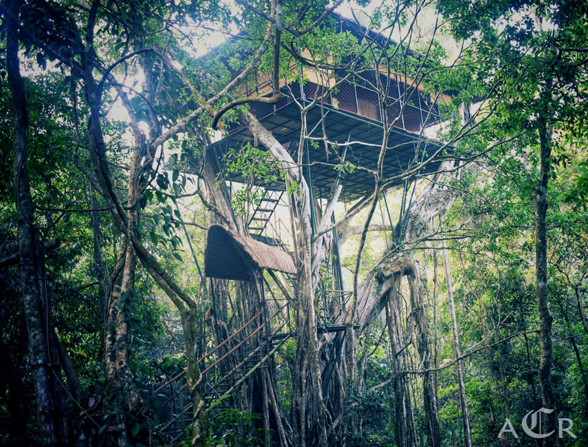 tree house in Wayanad kerala