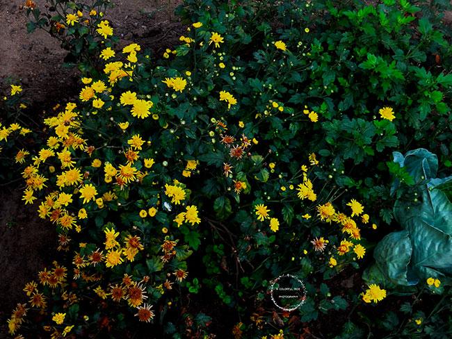 companion planting flowers