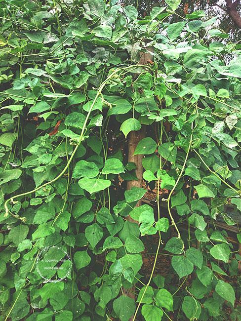 garden tour Chennai