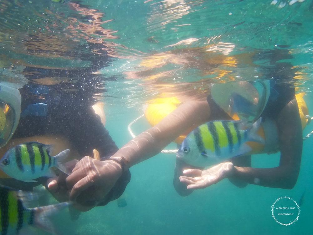 snorkeling andaman islands
