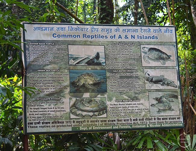 baratang island crocodiles