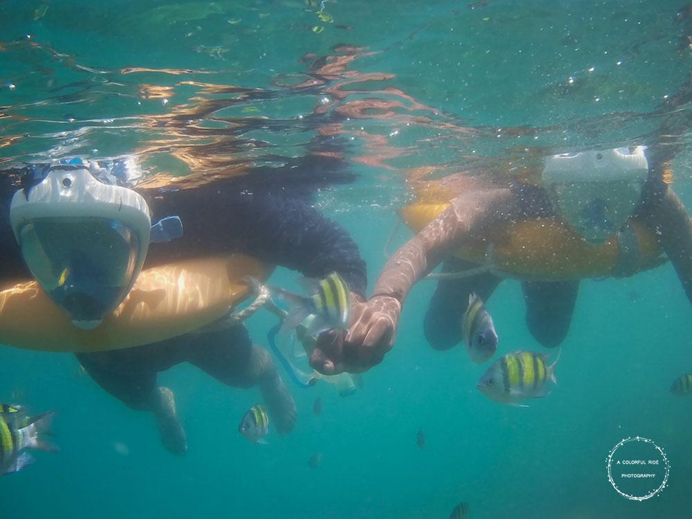 snorkeling andaman cost