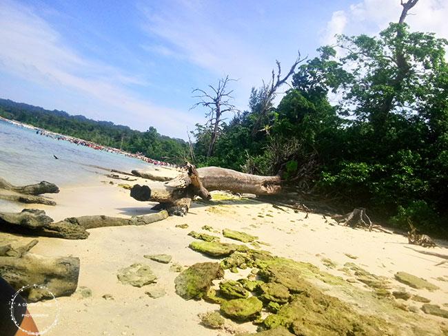 elephant beach andaman islands