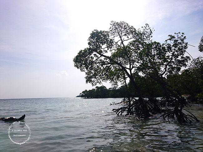 scuba diving in andaman blog
