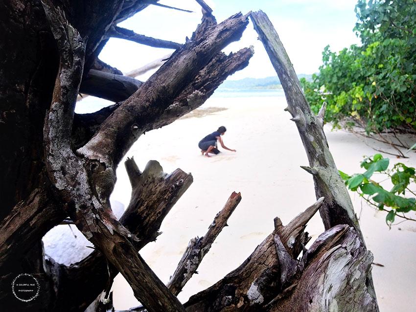 elephant beach trek
