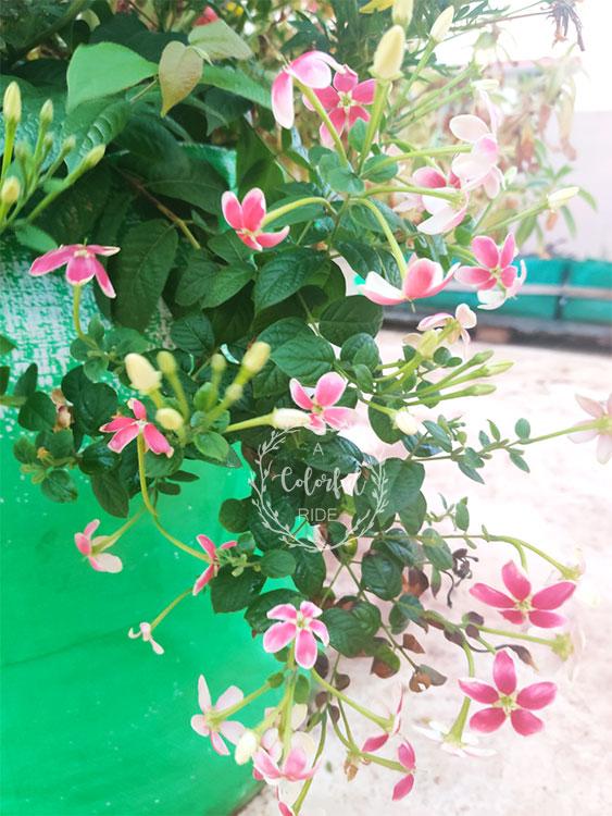 , How to start a flower garden