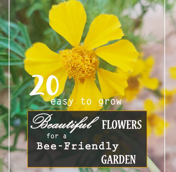20 EASY TO GROW BEAUTIFUL FLOWERS FOR A BEE-FRIENDLY GARDEN