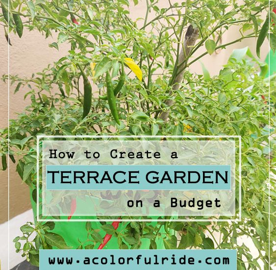 HOW TO CREATE A TERRACE GARDEN ON A BUDGET?