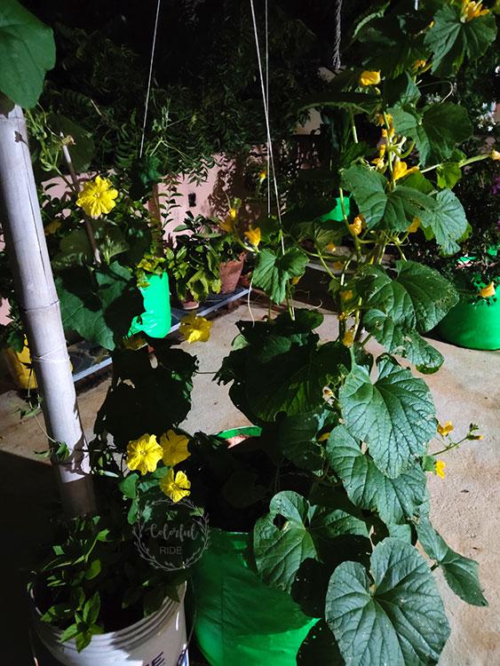 how to make a terrace vegetable garden