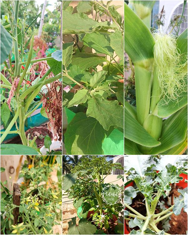 how to make a terrace garden in Chennai