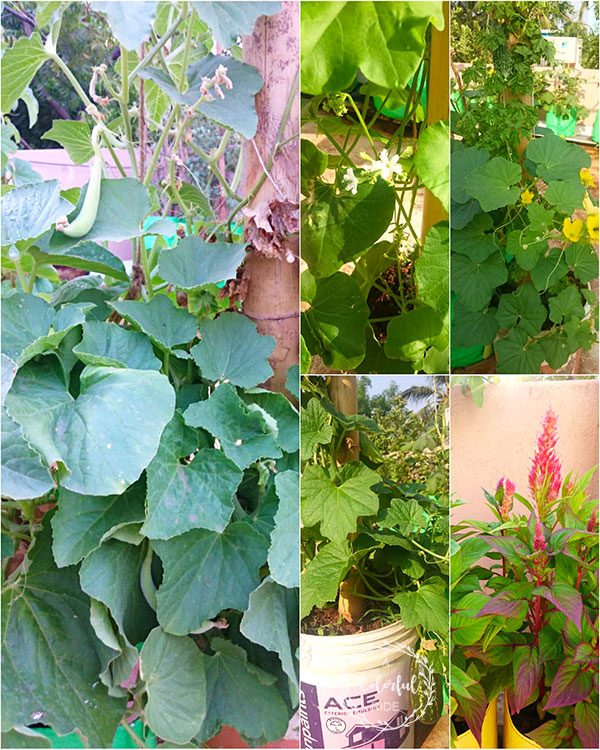 how to make a terrace garden at home