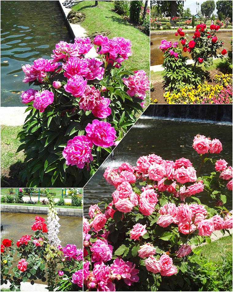 mughal garden Srinagar